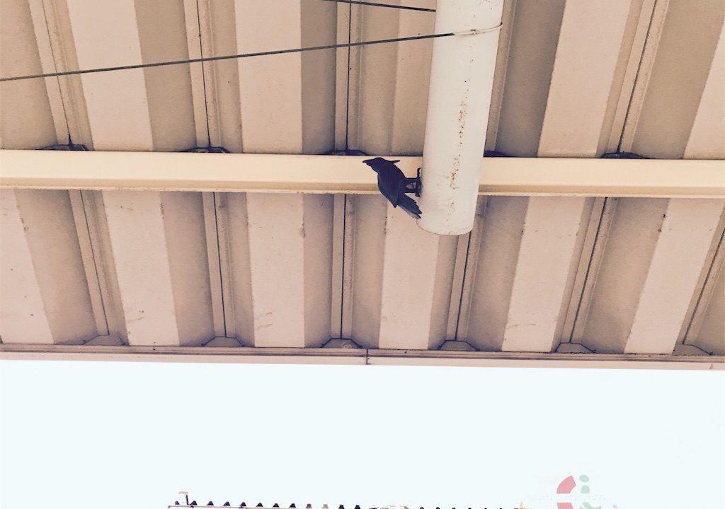 【謎のオブジェ】JR京浜東北線大井町駅1番ホーム9号車乗り場の番人