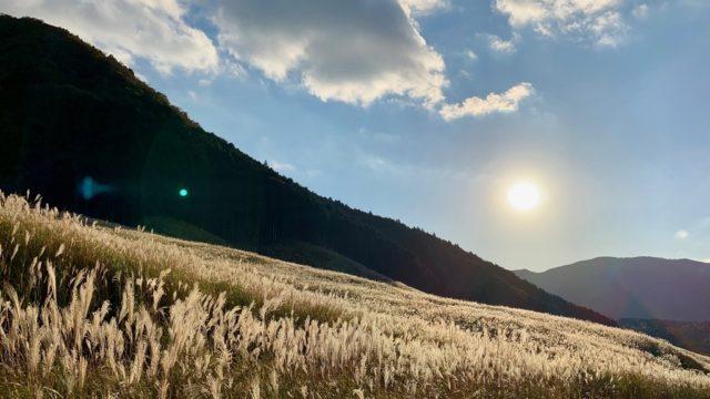 モンキー125とゆく旅 #10 仙石原すすき草原(神奈川県道75号湯河原箱根仙石原線)