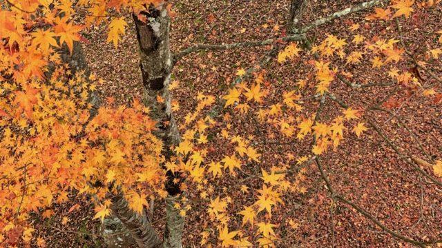 【極楽】山中湖温泉・紅富士の湯で紅葉とほうとうを堪能する